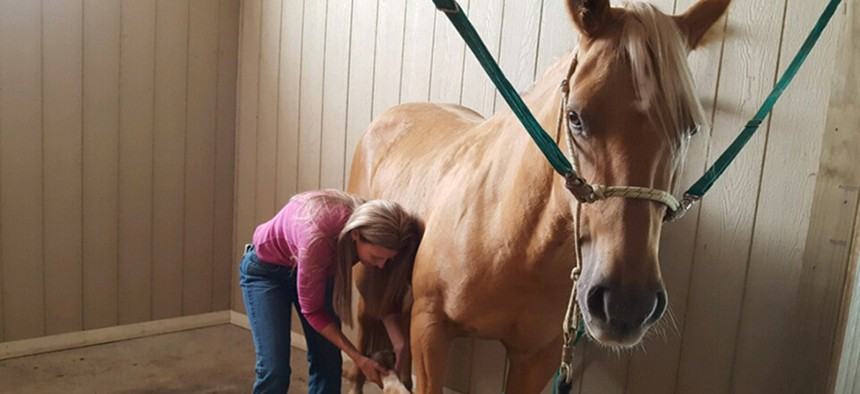 Nebraska horse massager Dawn Hatcher works on Sophie, a chocolate palomino, near Columbus, Nebraska. The state removed the licensing requirements for horse massagers, making it easier for people to get into that line of work.