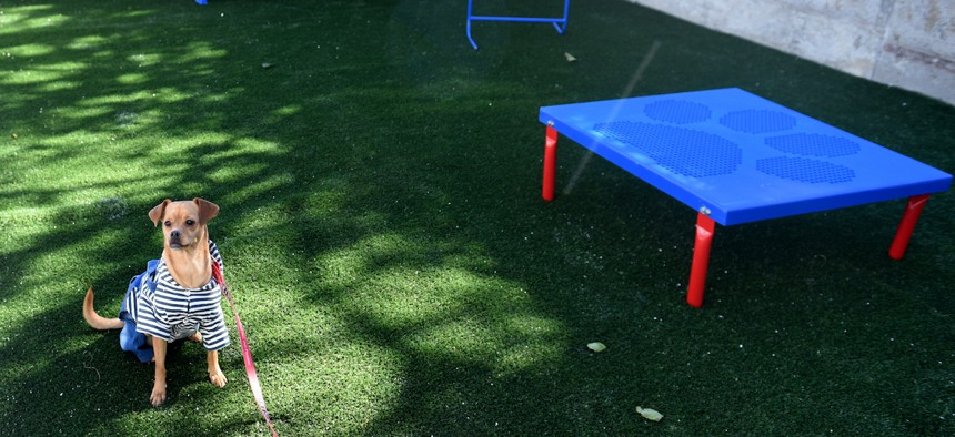 The shelter boasts outdoor play areas for pets, where residents can interact safely with their animals without fear of being seen by their abusers.