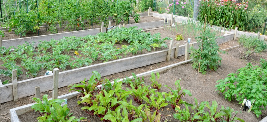 Residents have the chance to plant their own vegetables in the community garden plots.