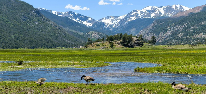 Geese in a marshy wetland in Rocky Mountain National Park, in Colorado.