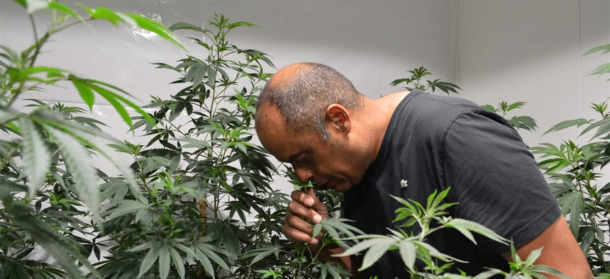 "Alexis Bronson smells one of his latest cannabis ""clone"" plants, a specialty strain. Bronson is a participant in Oakland, California's ""pot equity"" program, but he says the program so far has failed to deliver on many of its promises."