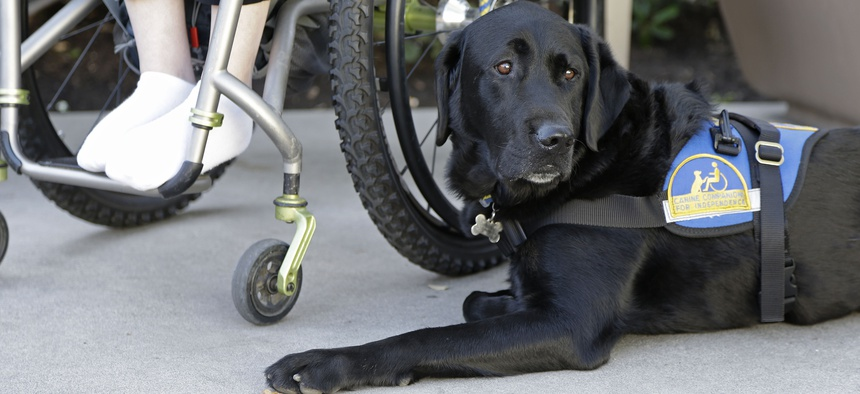 Policing fake service dogs is complicated, as there's no national registry that tracks or licenses them.