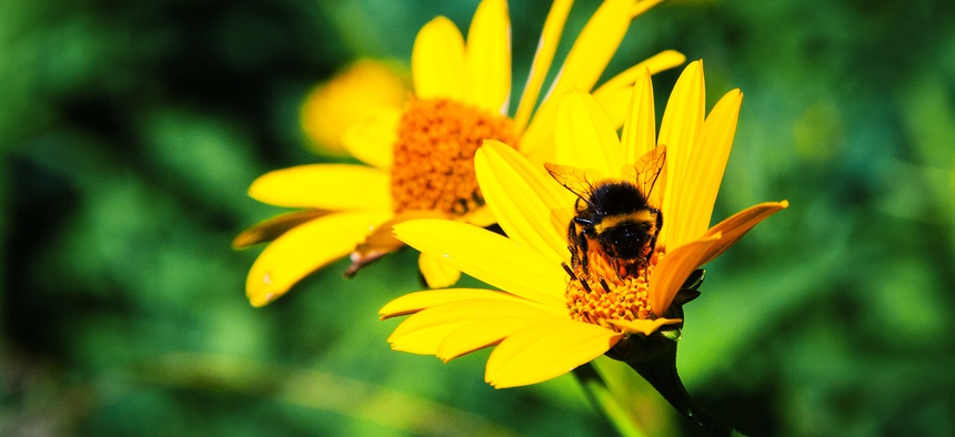 The program aims to protect a variety of pollinators but gives special weight to areas where the rusty patched bumble bee, an endangered species, is thought to live.