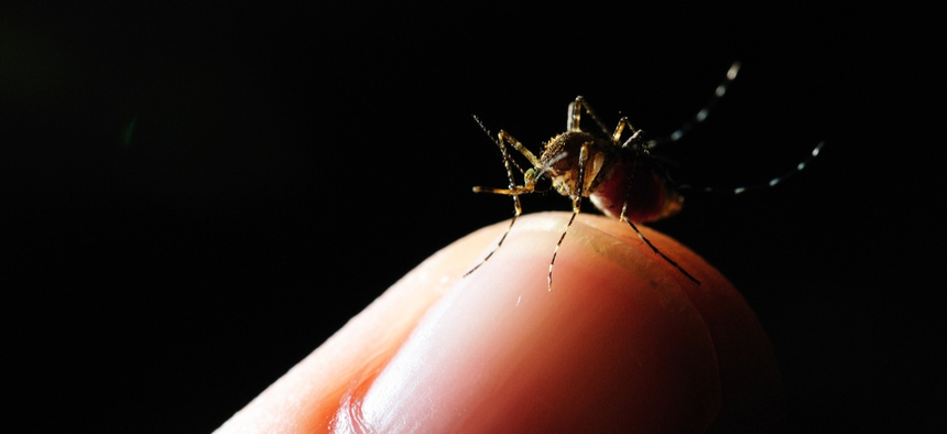 The original pilot program targeted Asian tiger mosquitoes, which can carry Zika, yellow fever and dengue, among other diseases.