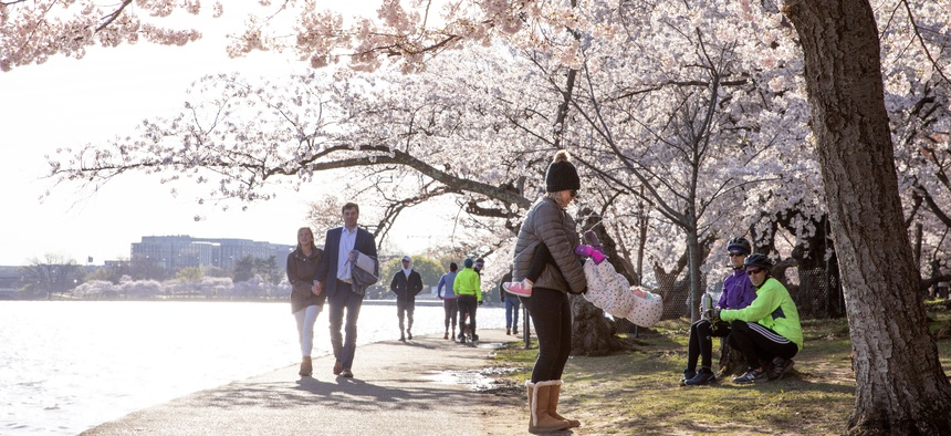 Crowds gathered around the cherry blossoms at the Tidal Basin in Washington, D.C. this weekend, prompting some to call on the National Parks Service to close the Tidal Basin for the duration of cherry blossom season.