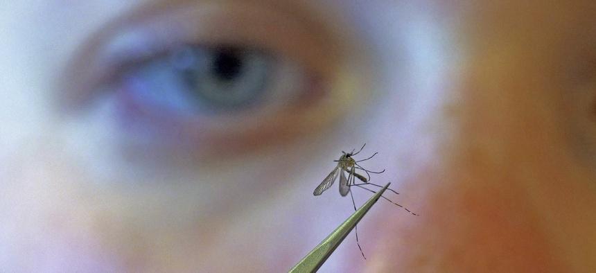 Salt Lake City Mosquito Abatement District biologist Nadja Reissen examines a mosquito in Salt Lake City.