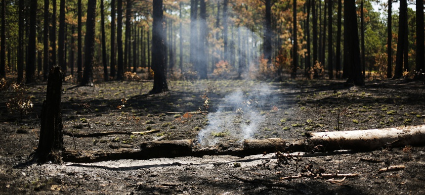 In this July 30, 2019 photo, smoke rises from a log a few days after a prescribed burn in a long leaf pine forest at Fort Bragg in North Carolina.