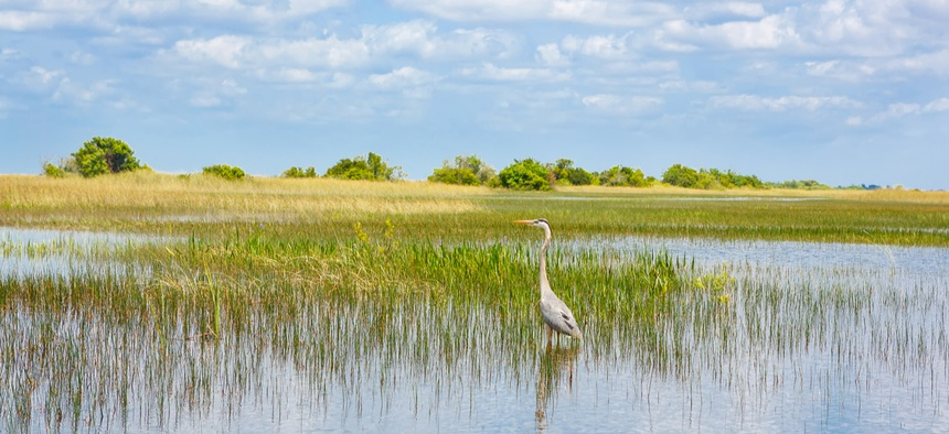 Florida has more wetlands than any of the other 47 contiguous state.